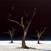 Deadvlei: 3 Trees